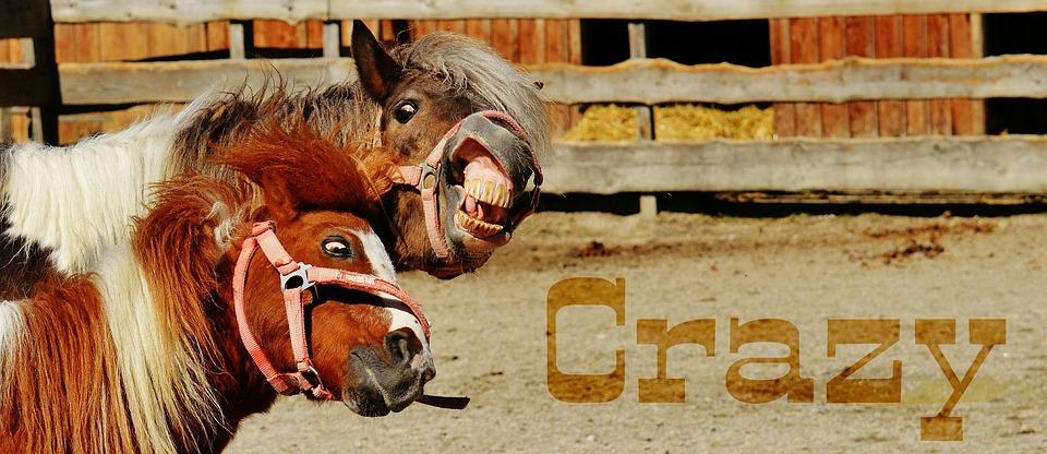 horses-1348616_960_720.jpg